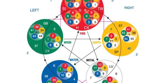 Энергетическая коррекционная кинезиология. Основы кинезиологии. Часть 2