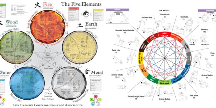 Энергетическая коррекционная кинезиология. Основы кинезиологии. Часть 1